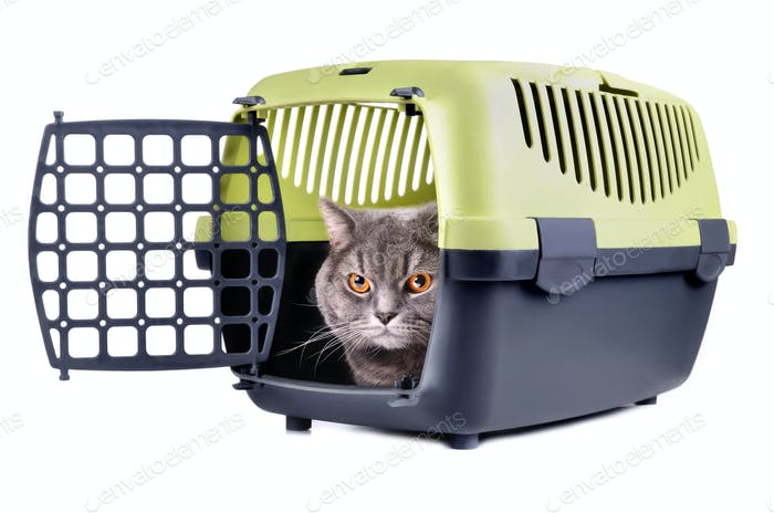Carrier box with cat