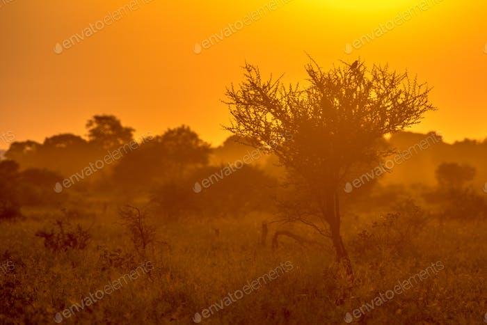Orange morning light on S100 Kruger