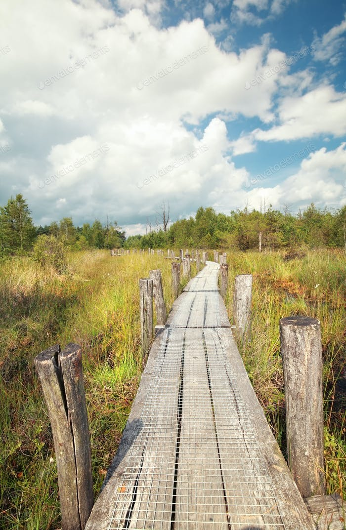 wooden path on swamp in summer