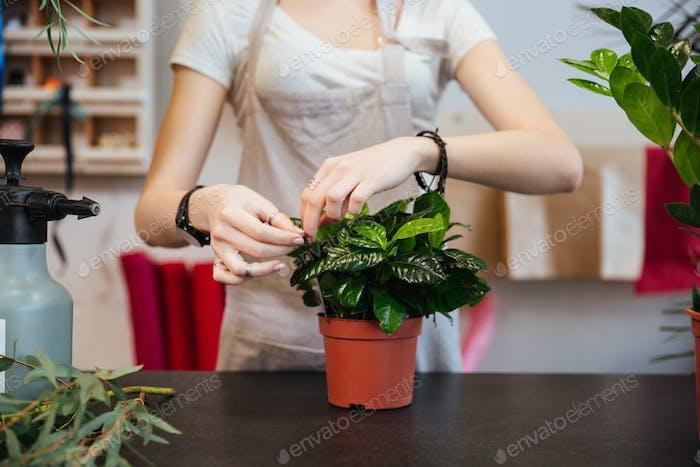 Woman florist taking care of plant in flowerpot