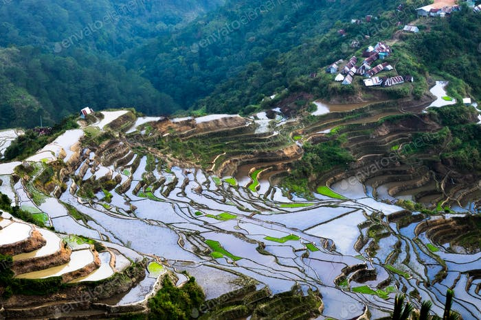 Village houses near rice terraces fields. Ifugao province. Banaue, Philippines