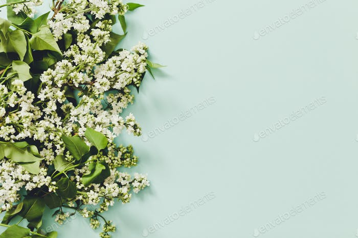 Spring flowers. Frame of twigs of blooming white lilac