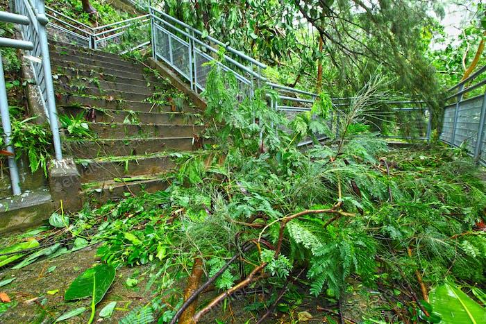 Destroy after typhoon