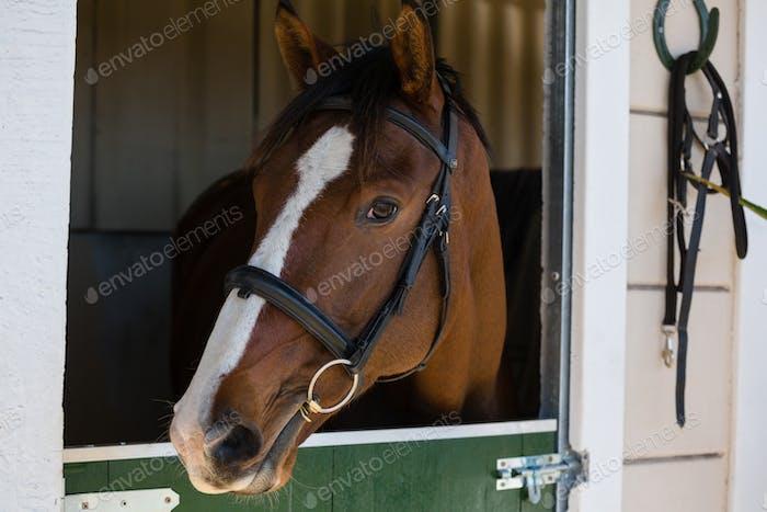 Pferd am Stall