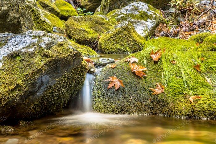 Ruhiger Waldbach im Herbstwald