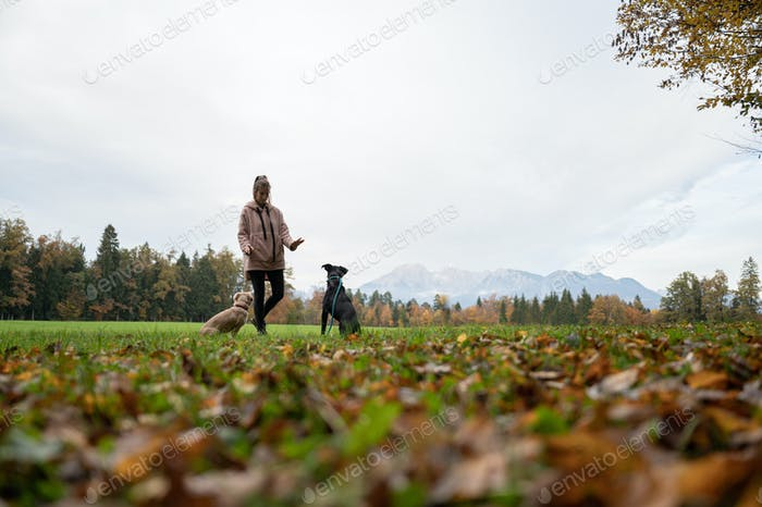 Low angle view of a young woman training her two dogs sitting beside her
