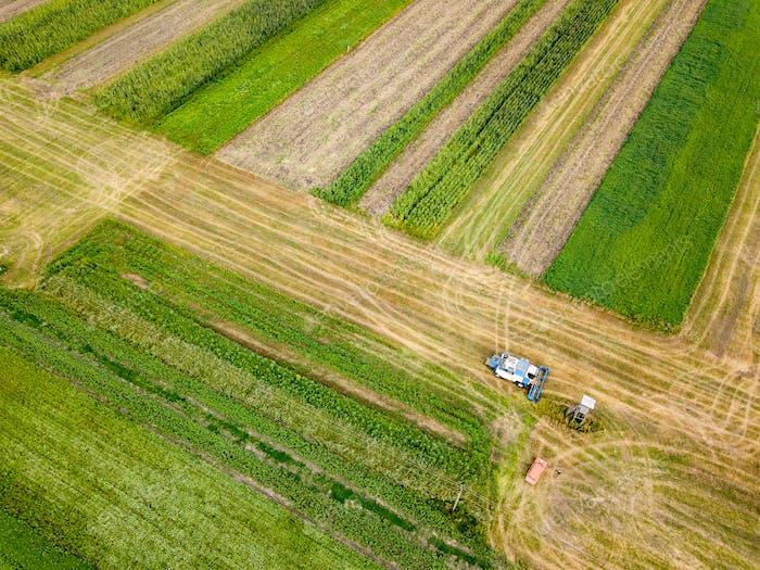 Luftaufnahme von einer Drohne von Mähdrescher pflügt den Boden nach der Ernte auf dem Feld im Herbst