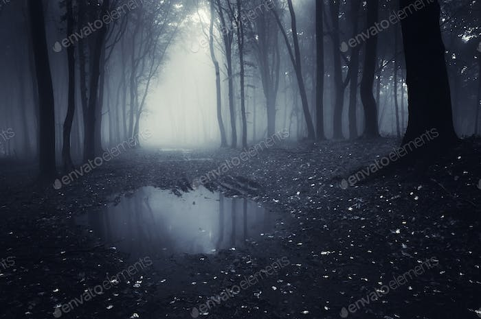 Dark haunted lake in forest