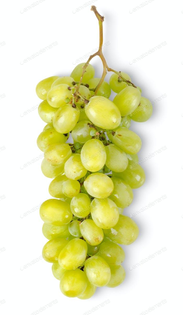 Bündel von grünen Trauben isoliert