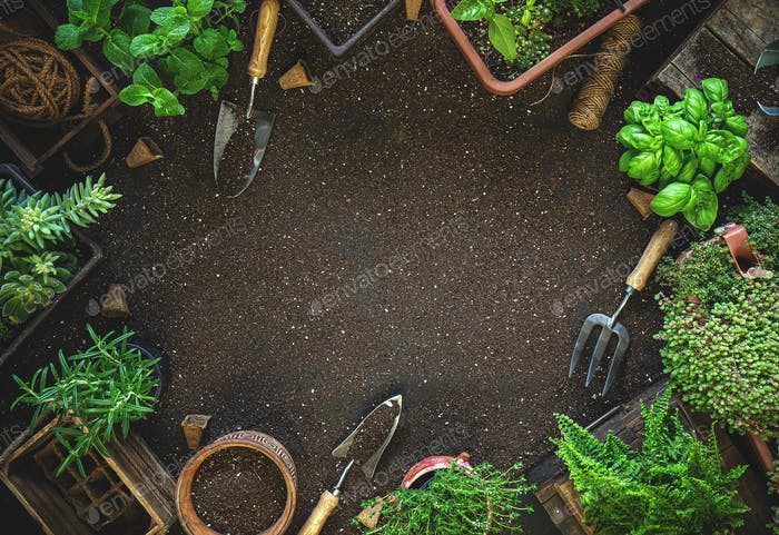Gardening tools and herbs