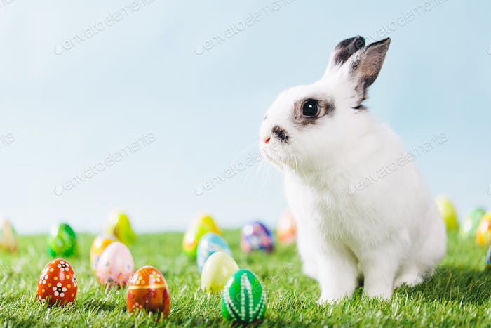 White bunny and Easter eggs on spring background.