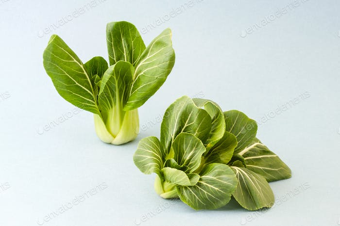 Cabbage Pak-choi (salad) on a light blue background.