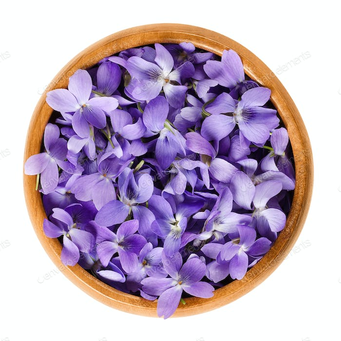 Wild violet flowers in wooden bowl over white