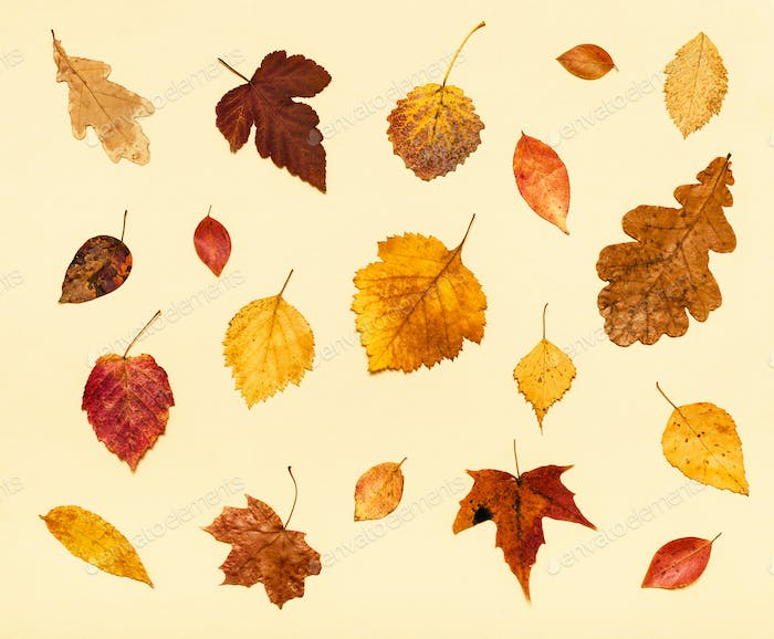 many dried autumn fallen leaves on light yellow