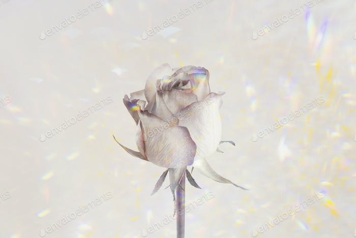 Rose flower on a holographic background design resource