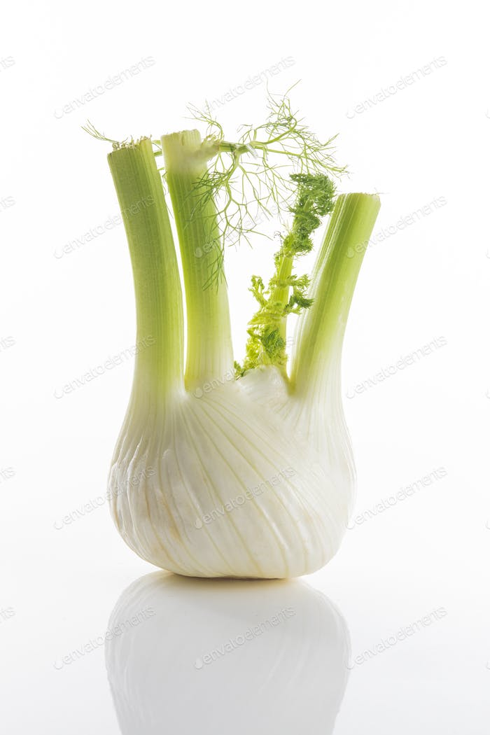 Fresh fennel bulb with leaves on a white background