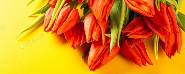 Orange Tulpen über gelben Hintergrund