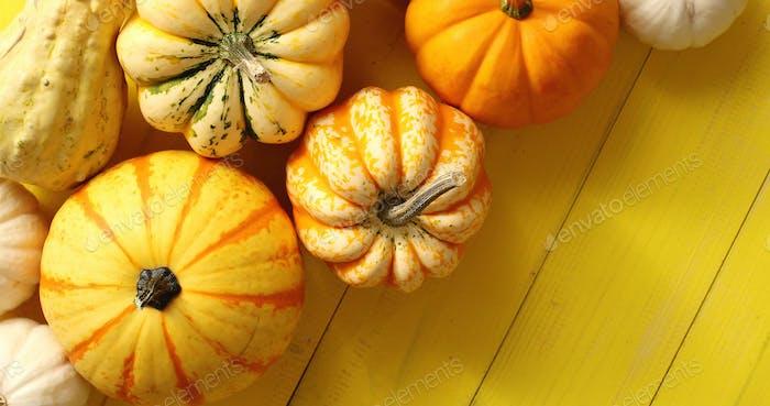 Pile of ripe pumpkins