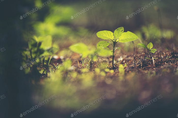 new life concept, plant seeding in nature