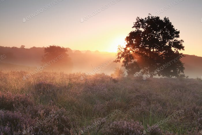tranquil misty sunrise on heathland