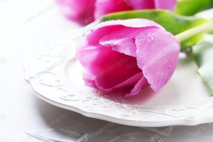 Amazing pink tulips on the stone background