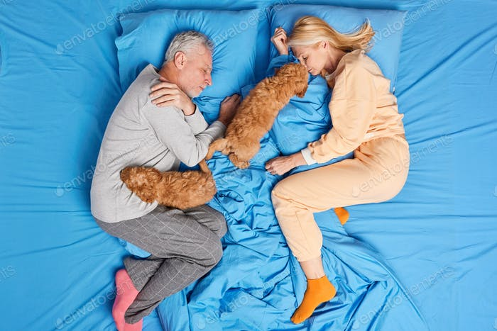 Top view of middle aged couple have rest in bed sleep deeply together with favorite pets enjoy peace