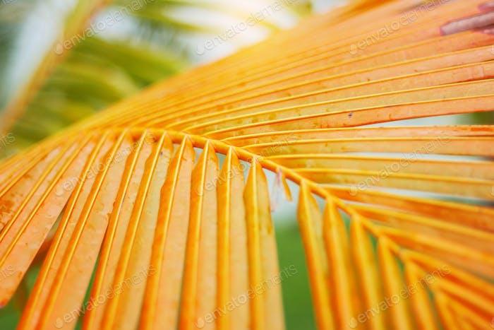 Kokosblatt mit gelb