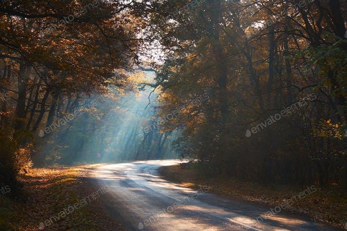 Carretera del Bosque de otoño brumoso
