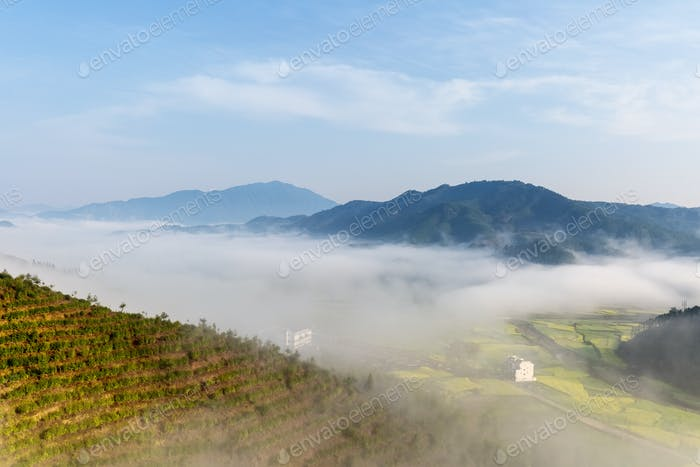 beautiful wuyuan spring scenery, the tea plantation and clouds fog in early morning