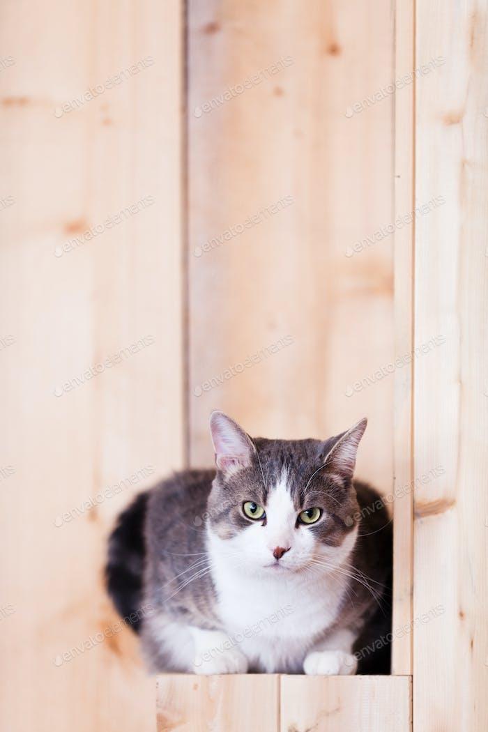 Katzenbeobachtung