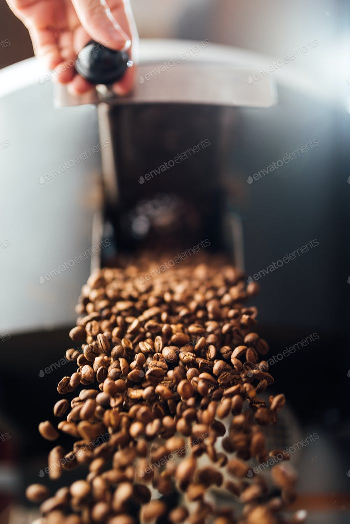 The flow of coffee beans from hand open flap of the cooling mixer of roasting machine