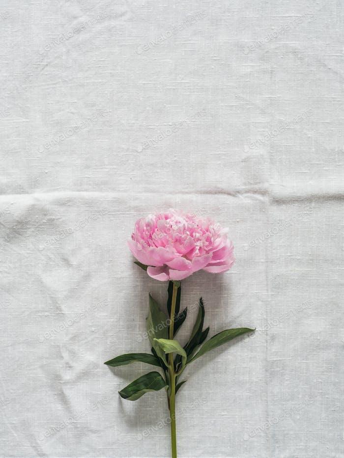 Pfingstrose Blume auf weißer Tischdecke