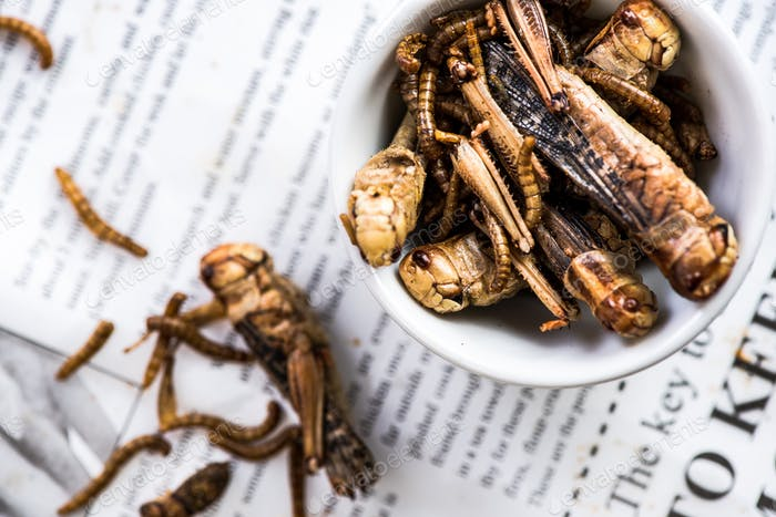 Fried edible worms, alternative proteins source food