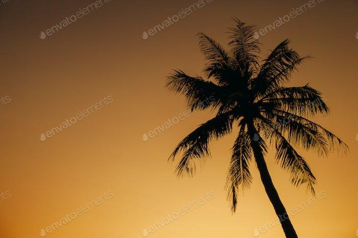 palm sunset silhoutte