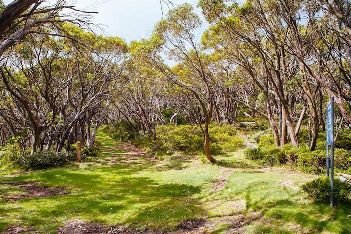 Mt Baw Wanderwege im Sommer in Australien