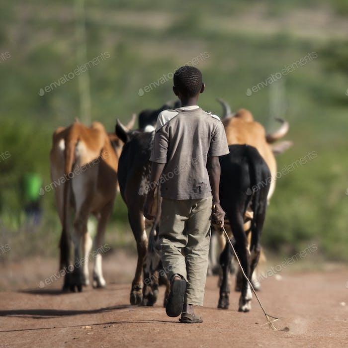 Hinteransicht des Jungen mit Rinderherde, Serengeti Nationalpark, Serengeti, Tansania, Afrika
