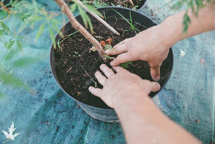 Teilansicht Gärtner Pflanzpflanze in Metalleimer