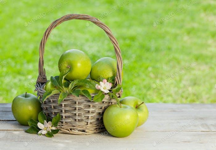 Fresh garden apples in basket