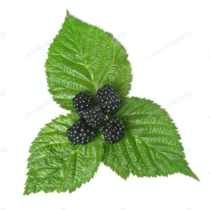blackberry on green leaf isolated on white