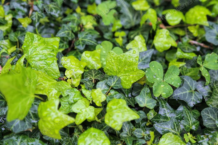 Close-up of wet plants with water drops, natural bright green background