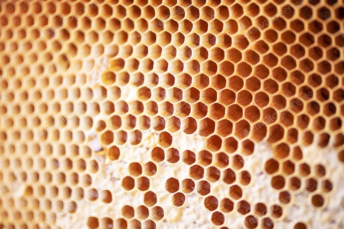 Honeycomb with cells full of fresh honey. Macro photography.