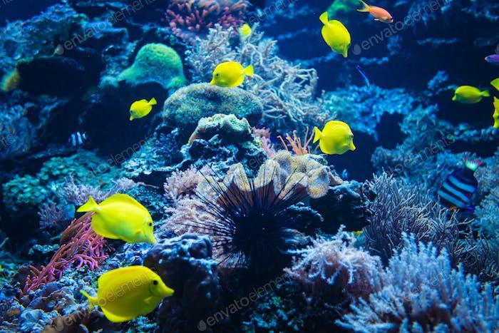 Korallenriff und Fisch unter Wasser Foto. Unterwasser-Weltszene.
