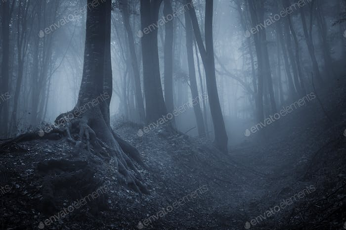 Night in a mysterious forest with fog