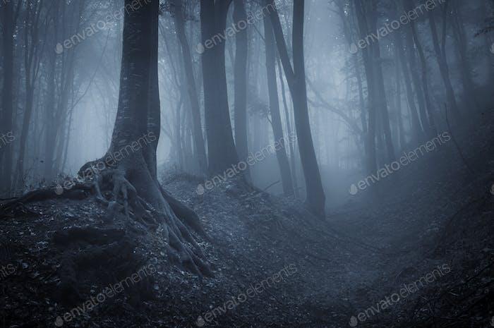 Nacht in einem geheimnisvollen Wald mit Nebel