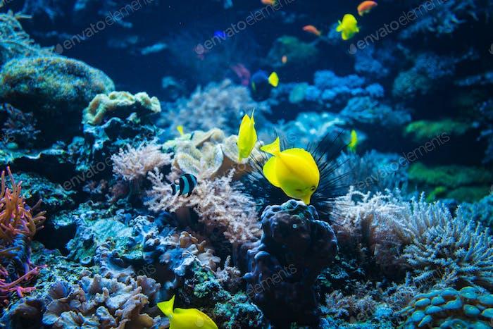 Tropische Fische auf einem Korallenriff. Farbenfrohe Fische in dunkelblauem Wasser