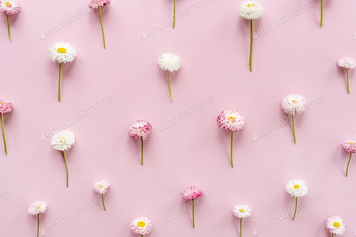 Pink white flower on pink background.