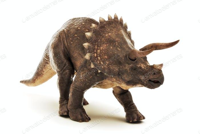 Triceratops auf weiß