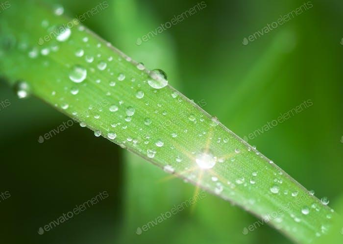 Makro von Regentropfen.