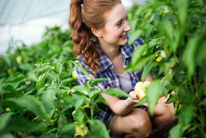 Frau, die in einem Tomatengewächshaus arbeitet