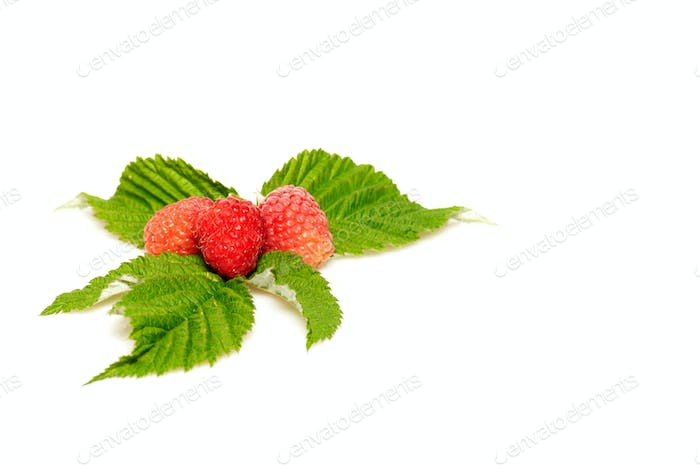 Splendid and tasty raspberries on a white background.